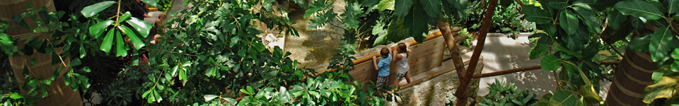 children on a bridge in the Tropics house surrounded by tropical plants