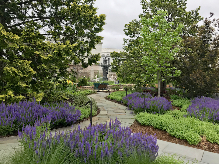 Bartholdi Fountain and Gardens with sage in bloom