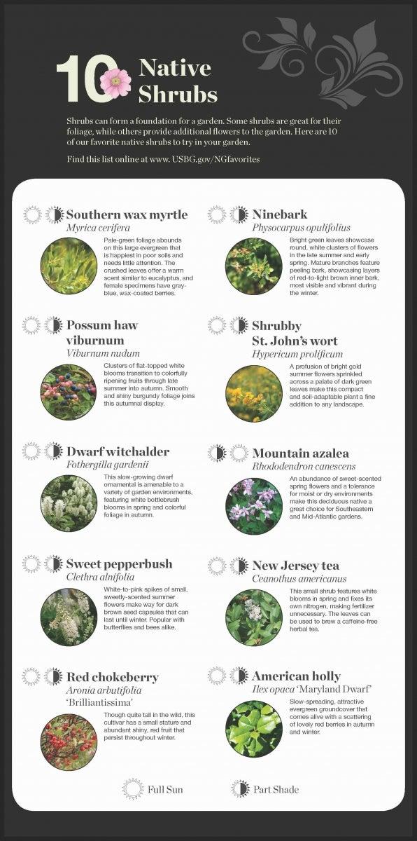 National garden native plant recommendations united states botanic 10 native shrubs mightylinksfo