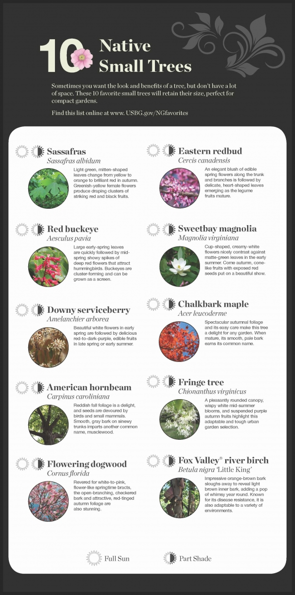 National garden native plant recommendations united states botanic 10 native small trees mightylinksfo