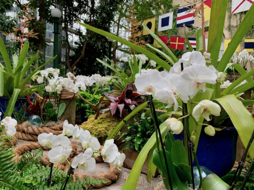 White Phalaenopsis orchids fill the Garden Court
