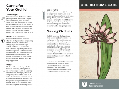 How to care for orchids in your home