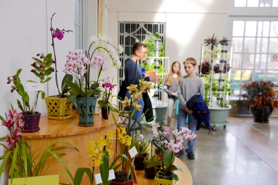 visitors explore an orchid display