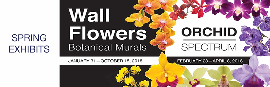 Spring Exhibits: Wall Flowers and Orchid Spectrum