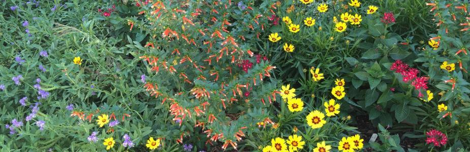 Yellow, orange, red, and purple flowers in bloom