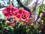 Orchids in the sunlight